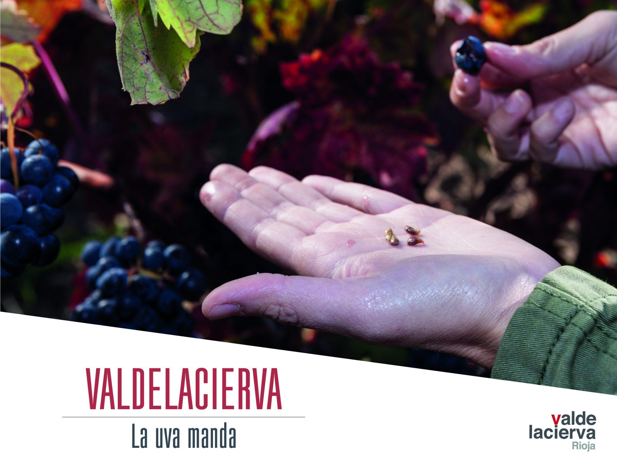La Uva manda en Valdelacierva