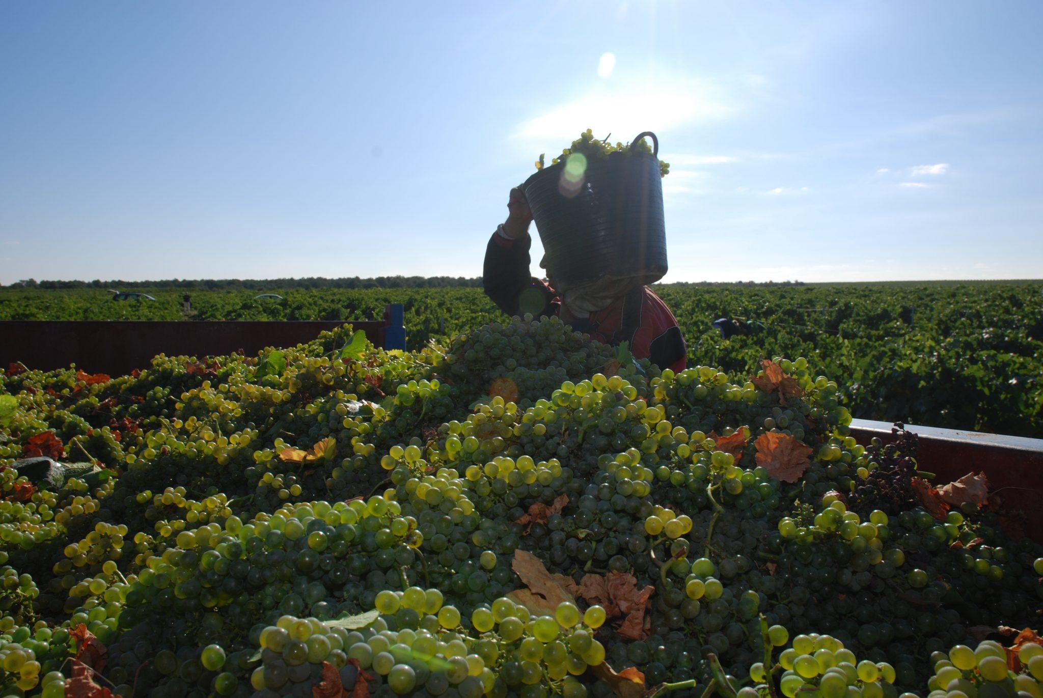 Bodegas GarciGrande se compromete con la calidad  en el vino de Rueda