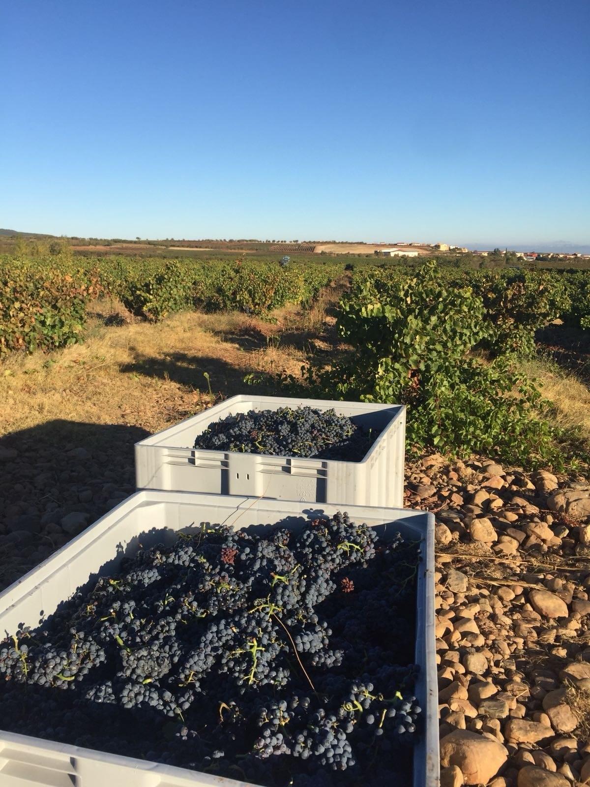 Las Bodegas Valdelacierva se sitúan como representantes perfectos de los vinos de La Rioja