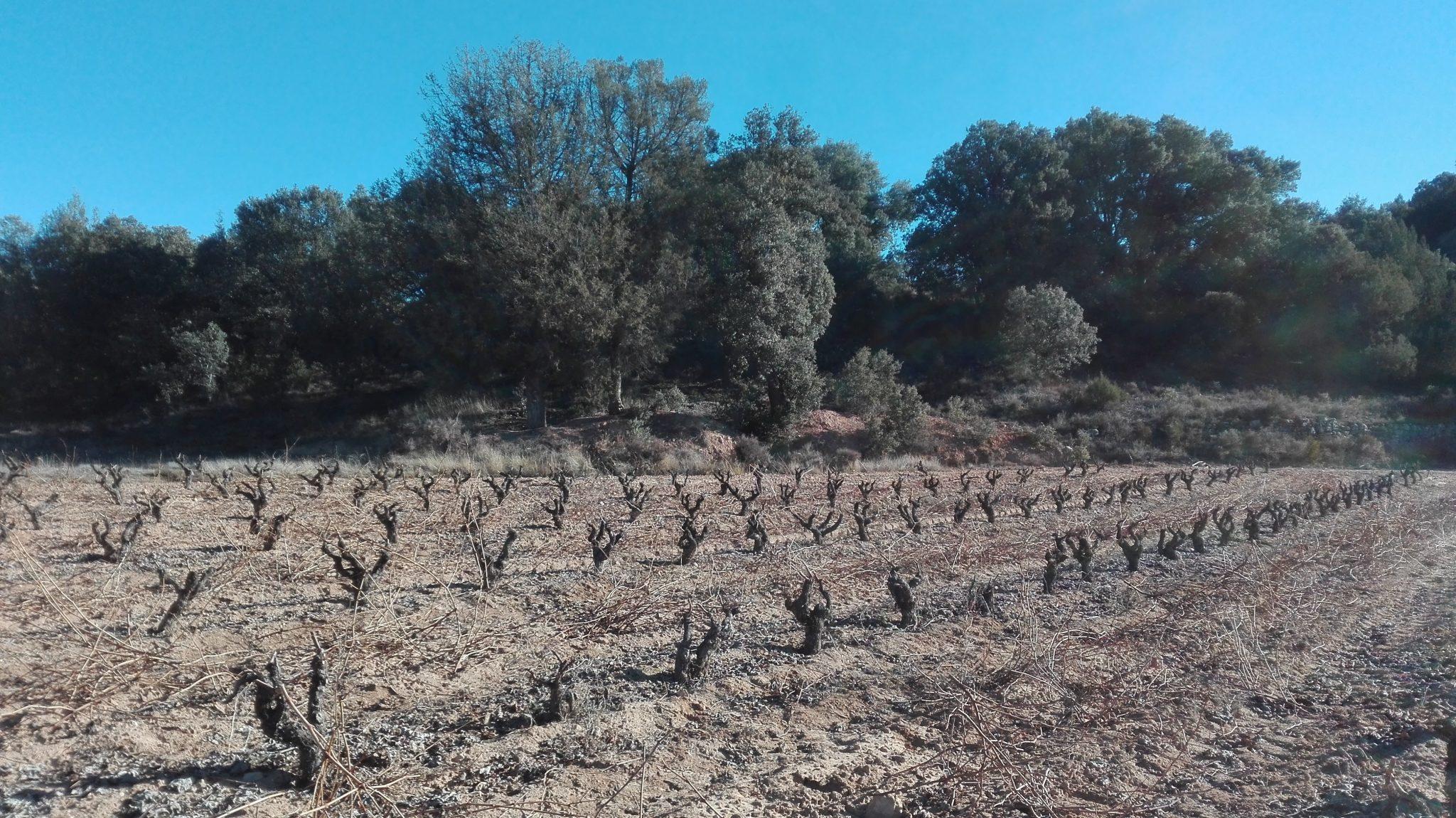 Las Bodegas Gormaz, punto de referencia de las mejores bodegas de Ribera del Duero