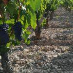 ¿Cómo se elabora un vino tinto?
