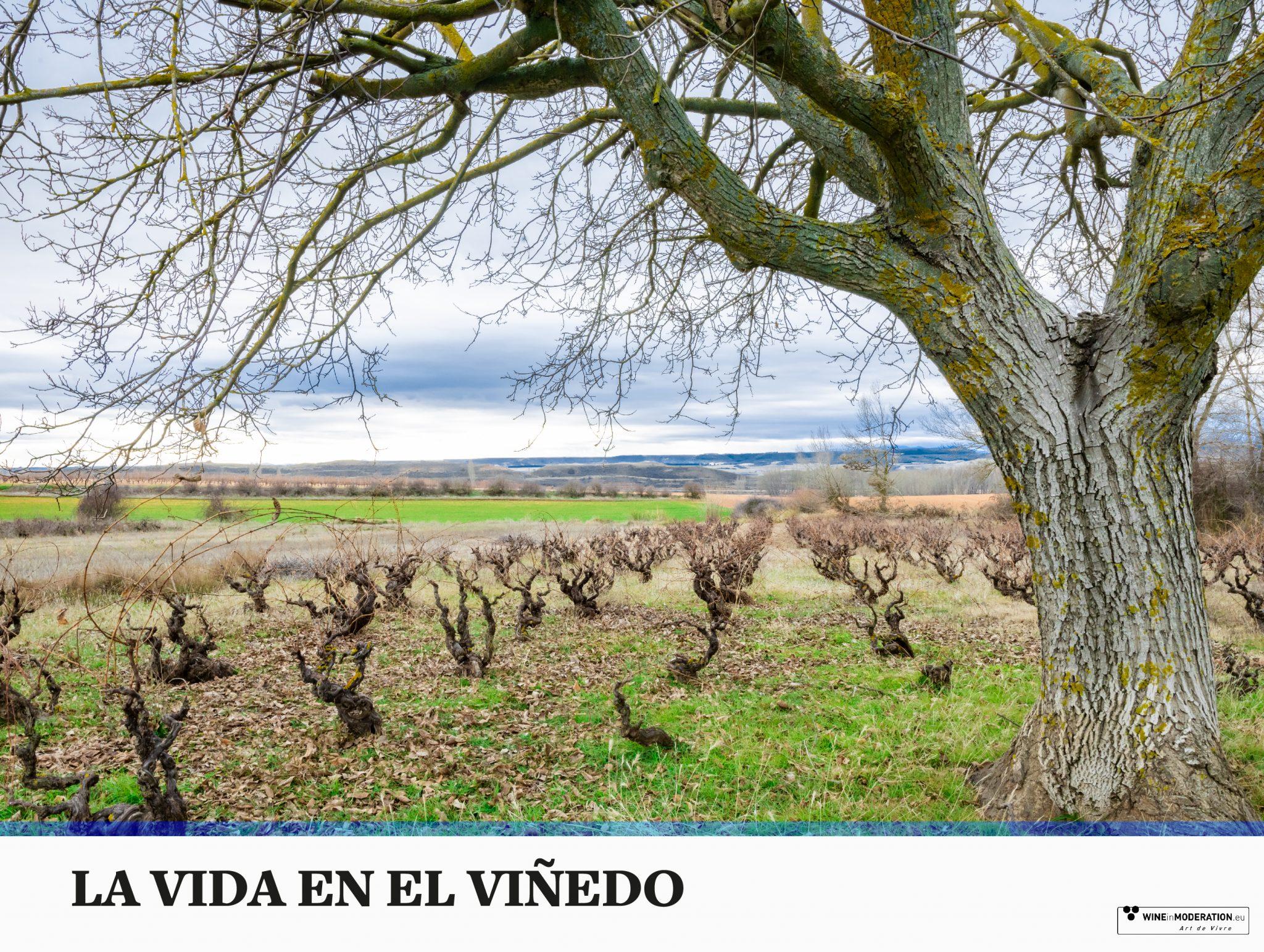 La vida en el viñedo