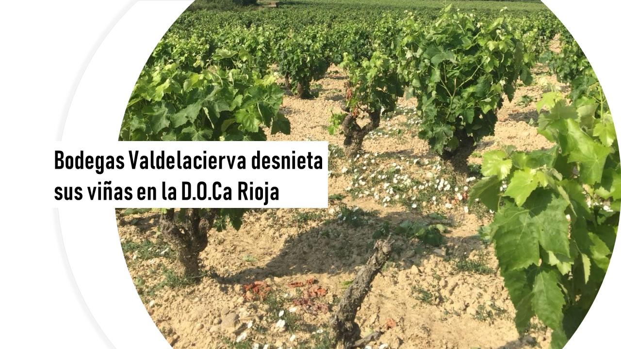 Bodegas Valdelacierva desnieta sus viñas en Rioja
