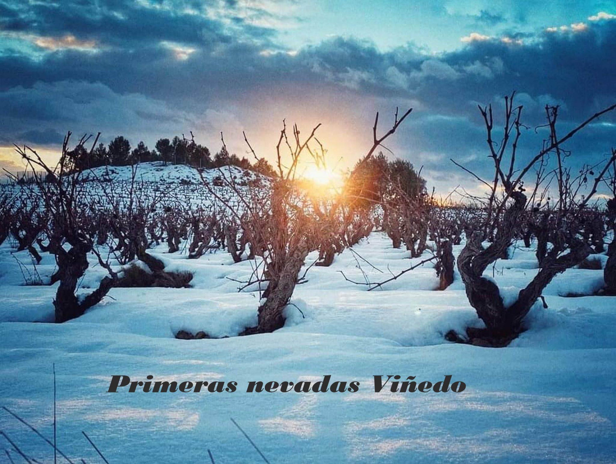 ¿cómo afecta la nieve en el viñedo?