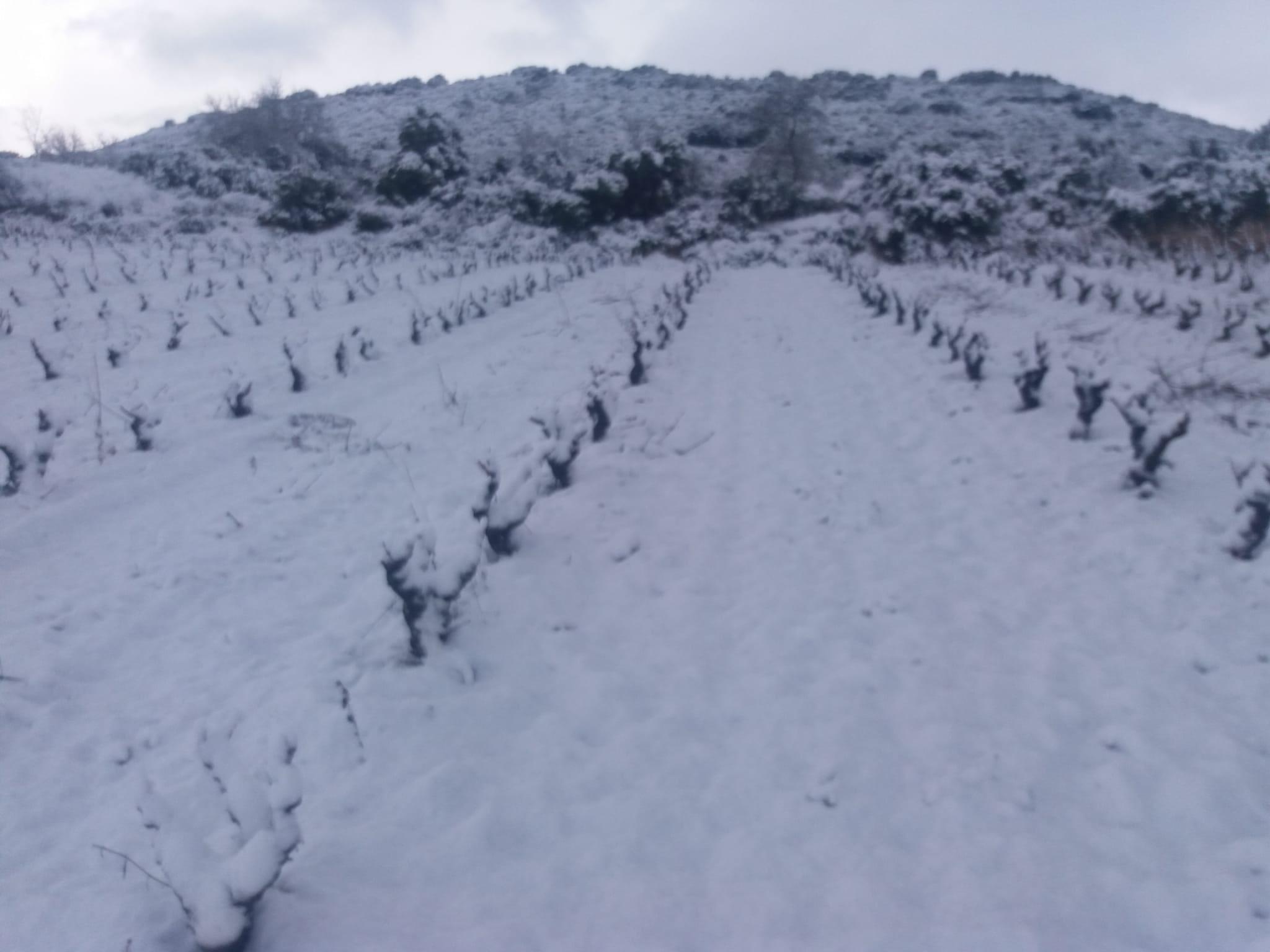 viñedo valdelacierva rioja nevado beneficios de la nieva