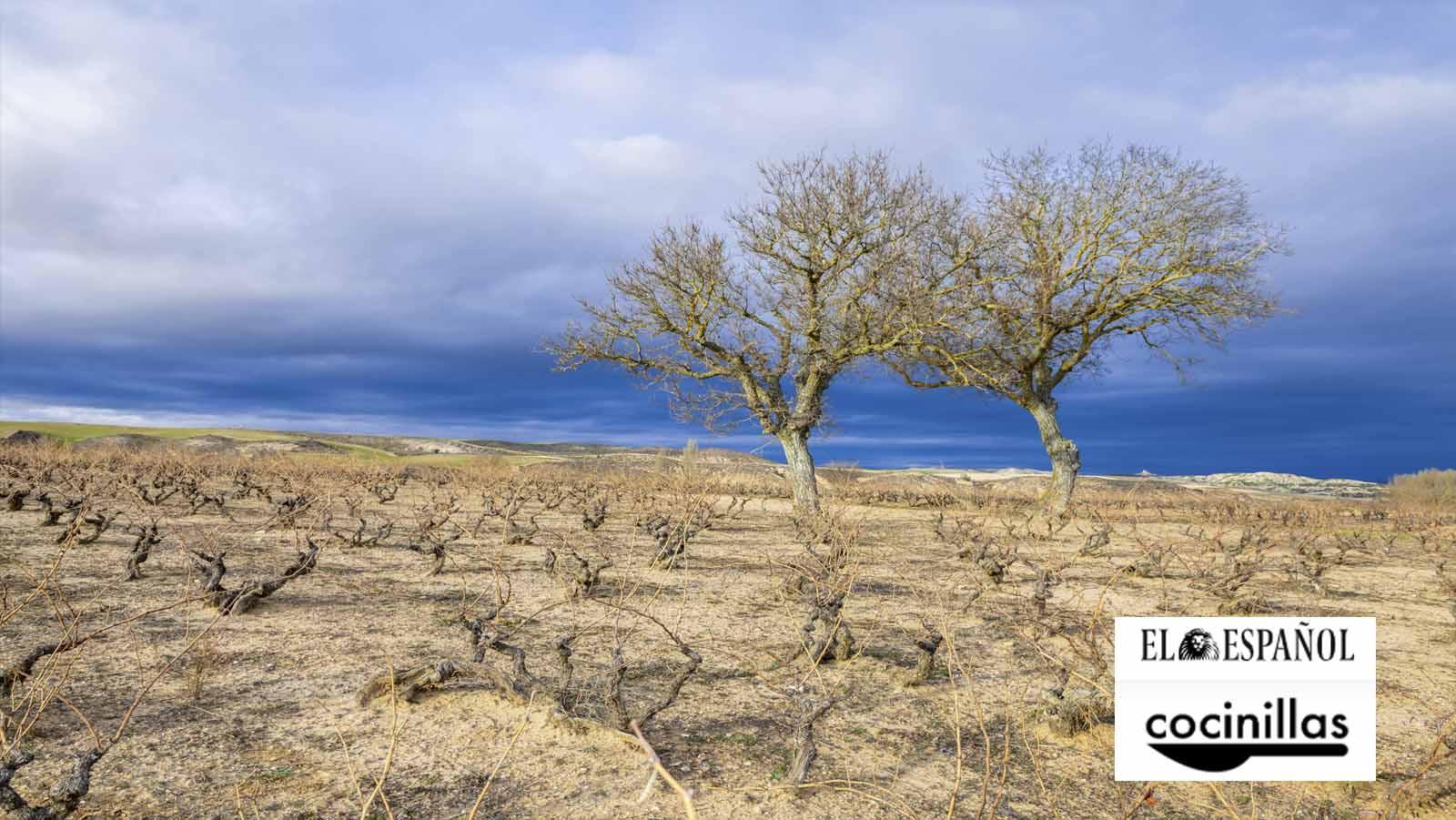 Las diferencias entre los vinos de Rioja y Ribera del Duero por Cocinillas